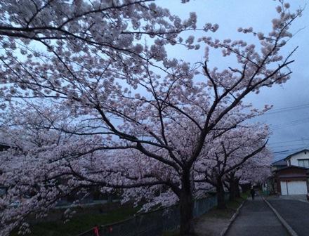 2014-04-23_img_3135.jpg