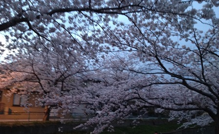 2014-04-23_img_3137.jpg