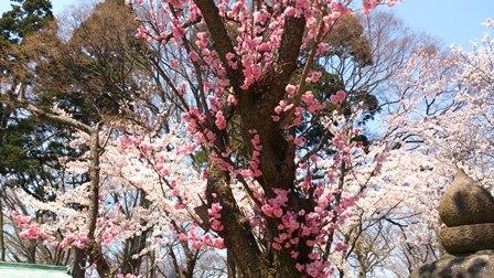 2014-04-24_dsc_0016.jpg