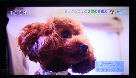 2014-11-01-img_4251.jpg